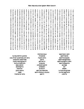 Male Reproductive System Word Search Word Search Search