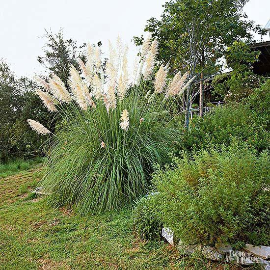 We just bought a home (which was vacant for more than a year) that has pampas grass plants at the corners of the patio. The grasses are about 9 feet tall, appear dead, and are taking over the patio. What is the best way to tr/
