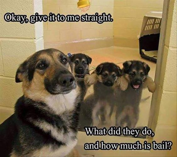 "Funny Animal Pictures Of The Day - 23 Pics | Bunch of troublemakers - ""What am I going to do with you hooligans?!?"""