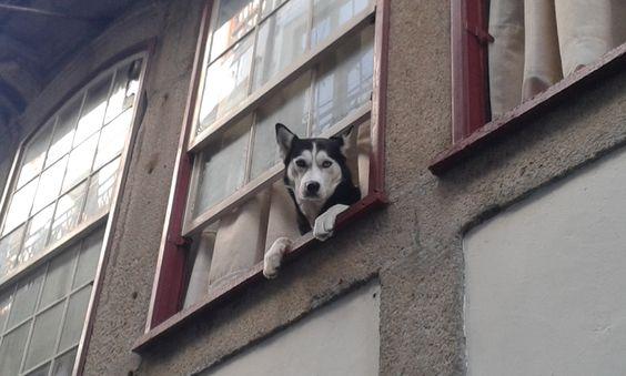 Cachorro observador -  Cidade do Porto