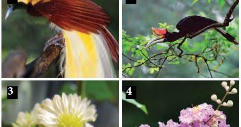 Download Gambar Flora Fauna Dan Alam Benda Lihat Juga Ide Terkait Mengenai Contoh Gambar Flora Fauna Dan Alam Benda Lainnya Dibawah Ini Di 2020 Flora Gambar Sketsa