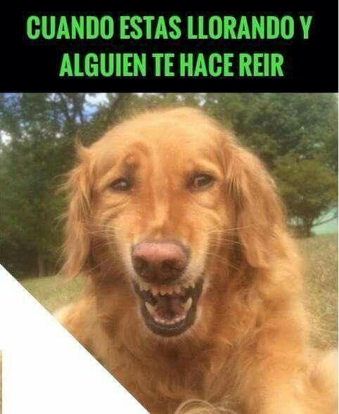 Dibujos De Gatos Llorando Resultados De Yahoo Espana En La Busqueda De Imagenes Chistes Tiernos Memes Ridiculos Fotos Divertidas De Animales