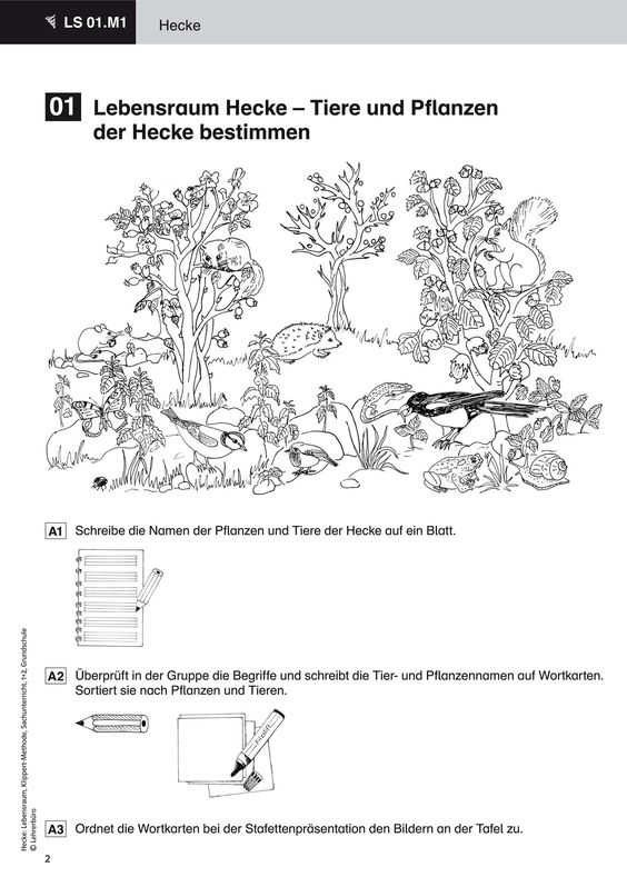 tiere des waldes arbeitsblätter  worksheets