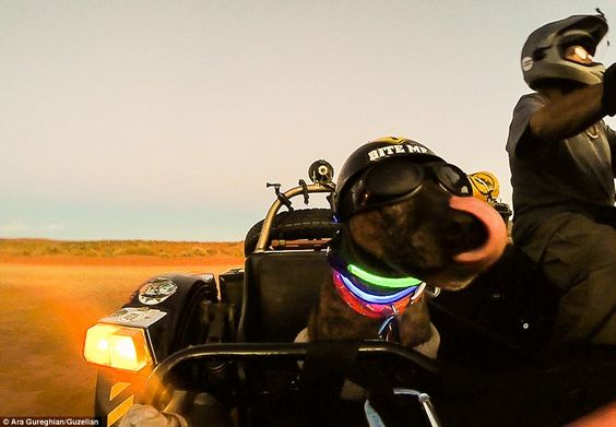 Spirit enjoys the ride in Utah.The pair have been documenting their progress through jour...