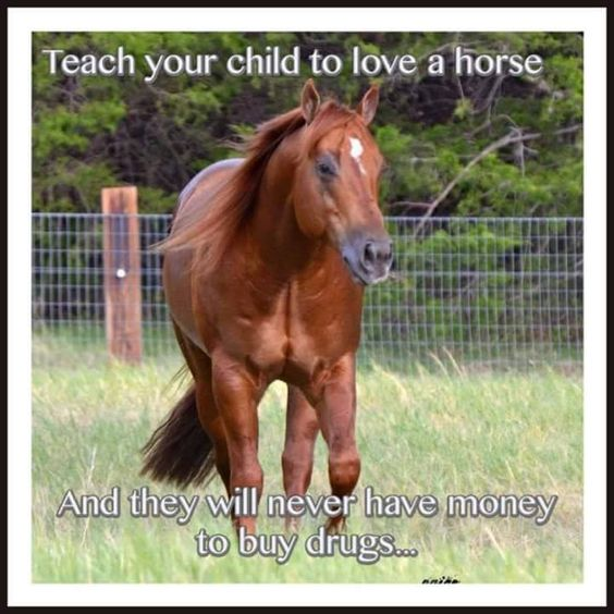 "BIRDS & DAFFODILS: ""TEACH YOUR CHILD TO LOVE A HORSE AND THEY WILL NEVER HAVE MONEY TO BUY DRUGS..."":"