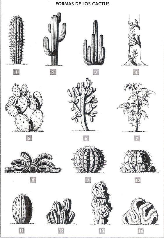equum libertè: cactus formas