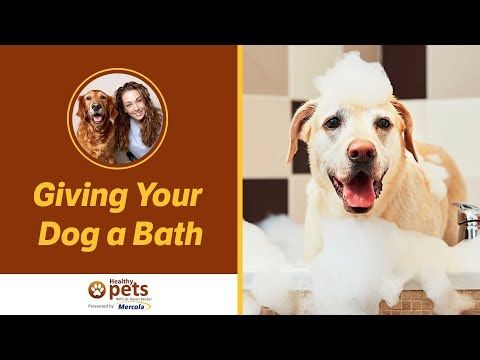 Dr Becker On Giving Your Dog A Bath Youtube Video Dogs Dog
