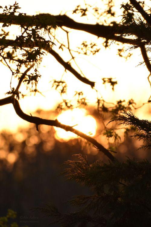 Sunrise Bokeh by Abi Ashra (Tumblr)