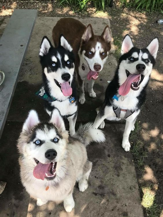 21 απίστευτες φωτογραφίες με σκυλάκια που θα σας φτιάξουν την μέρα (Μέρος 1)