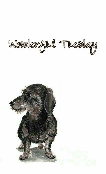 Wonderful Tuesday