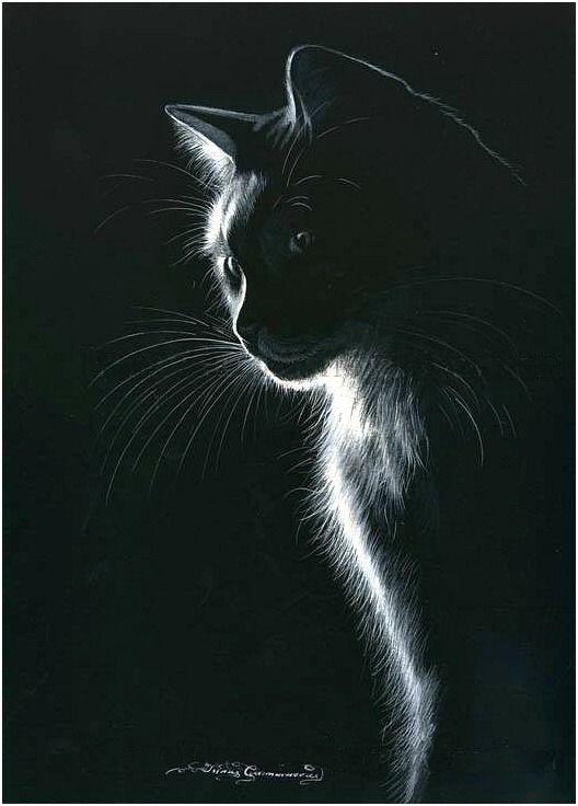 Irina Garmashova Cawton Backlight Scratchboard Art Cat Photography Cat Art