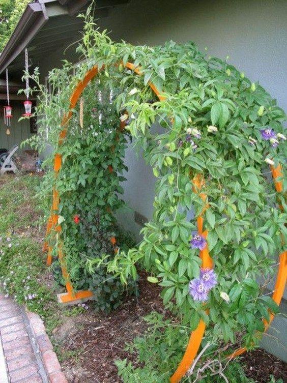 Cool Diy Garden Trellis Ideas 49 Trellis Plants Diy Garden Trellis Garden Trellis