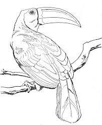 """Résultat de recherche d'images pour """"oiseau dessin"""""""