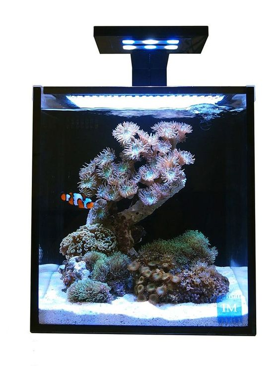 Innovative marine 10 gallon nuvo fusion nano aquarium for 55 gallon fish tank starter kit