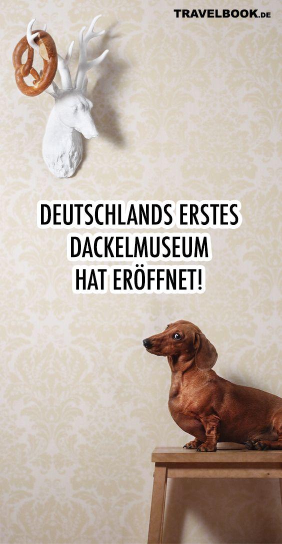 Das Ist Deutschlands Erstes Dackelmuseum Dackel Ferien Mit Hund Urlaub Mit Hund