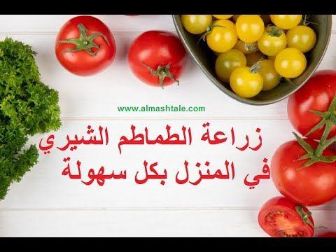 زراعة الطماطم من البذور في المنزل بثمرة طماطم من الثلاجة Youtube
