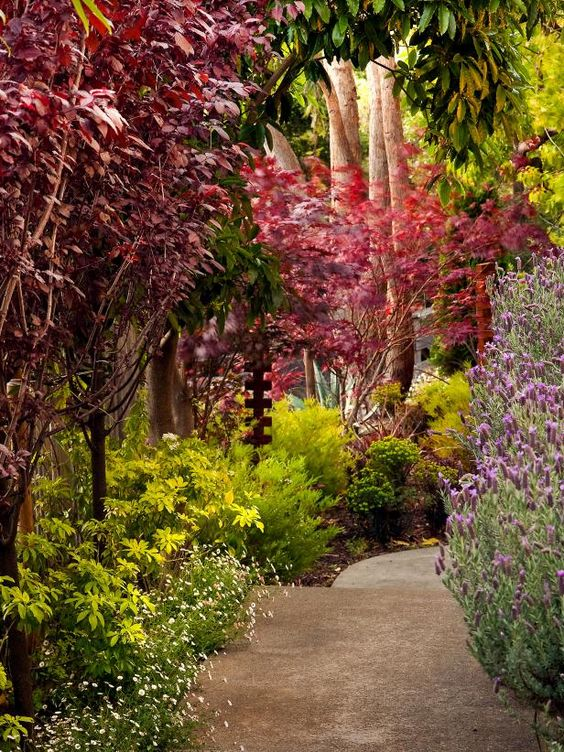 Get inspired by the vibrant, tiered color of this landscaped walkway on HGTV.com.