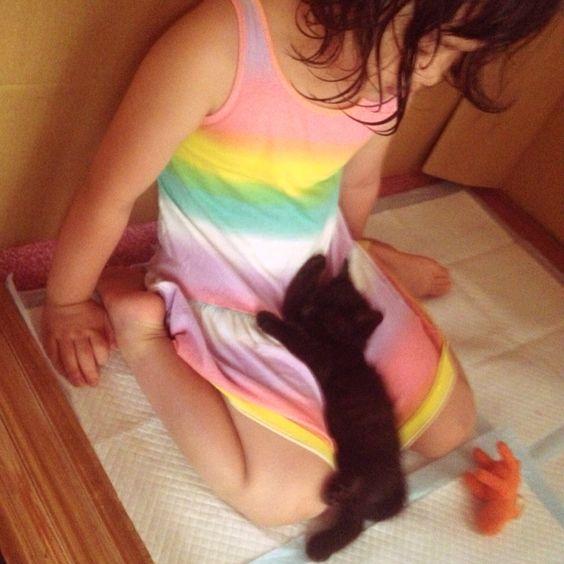 お昼寝 #Cat #Baby #子猫 #黒猫 #白猫