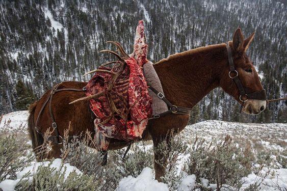 Les 52 plus belles photos du National Geographic 2016  2Tout2Rien
