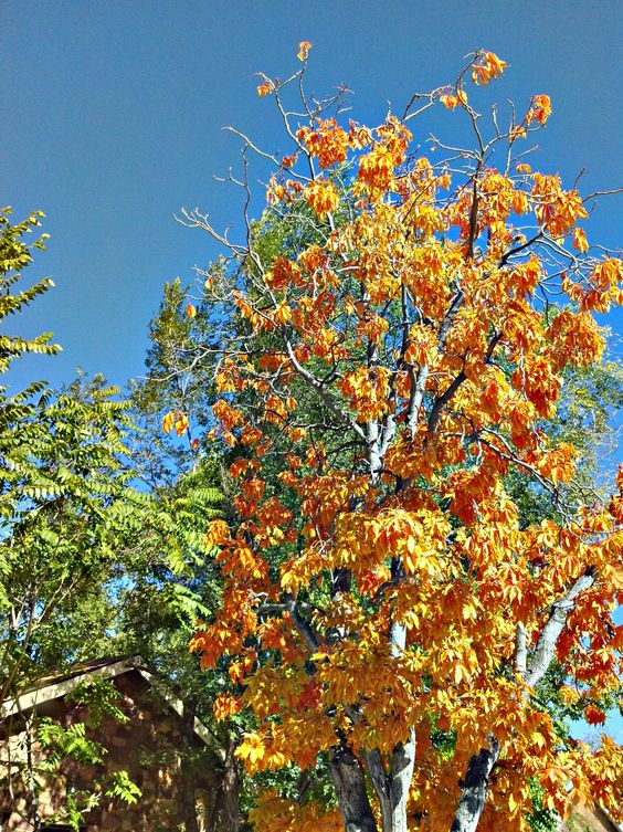 October in Boulder, CO
