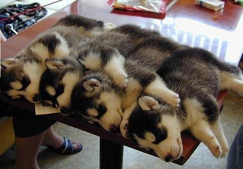 I want one so bad!!!