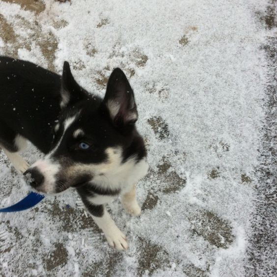Our snow puppy. :)