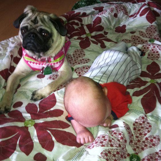 Pug- baby protector