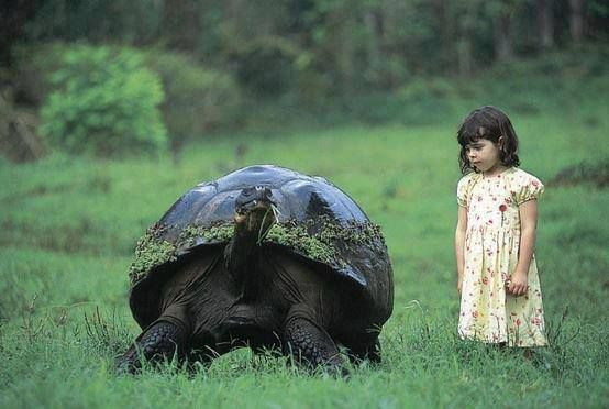 Giant tortoise  and a girl (Galapagos Islands).
