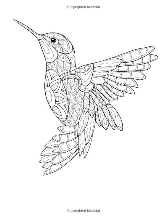 Pin By Hao Chen On Drawings Bird Coloring Pages Hummingbird Drawing Hummingbird Colors