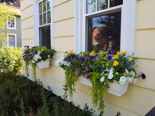 168048732a3547aa387847e993b6815e - Gardeners Supply Self Watering Window Box