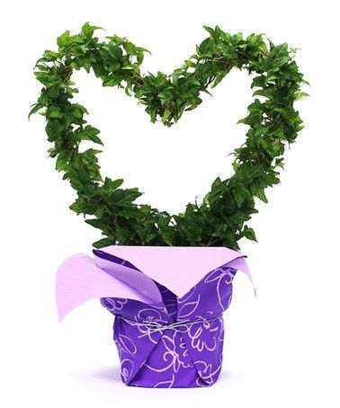 Love this Classic Heart Live Ivy Topiary on #zulily! #zulilyfinds