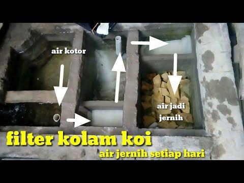 Filter Kolam Koi Air Jernih Setiap Hari Youtube Kolam Ikan Koi Kolam Ikan Penjernihan Air