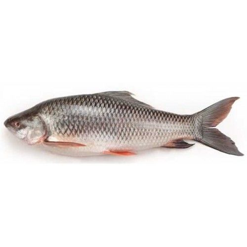 Fresh Rohu Fish 500 Grm Raw Fish Home Delivery Raw Fish Noida Raw Fish Shop Noida Raw Fish Near To Me In Noida Fish Fish Home Raw Chicken