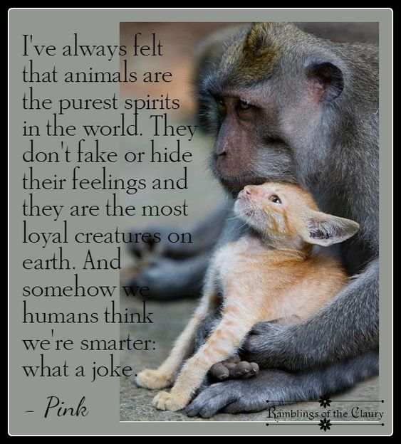 """For being created """"in the image of God"""" we humans have too often, treated other living beings in such terrible and horrific ways.:"""