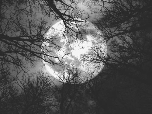 moon tree branches darkness