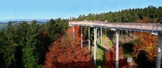 Wald Wipfel Weg Sankt Englmar Baumkronenpfad Baumkronenweg Bayern