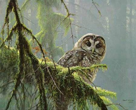 Robert Bateman - Wildlife Artist Extraordinaire: