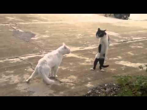 """https://t.co/bK7cxSlmnZ  Cats can be jerks   Funny Cat Fail Compilation 2013 http://img.youtube.com/vi/HyXMtIDvkt8/0.jpg *Today Special Deal*  *Today Special Deal* Please follow and like us:  var addthis_config =   url: """""""",  title: """""""""""