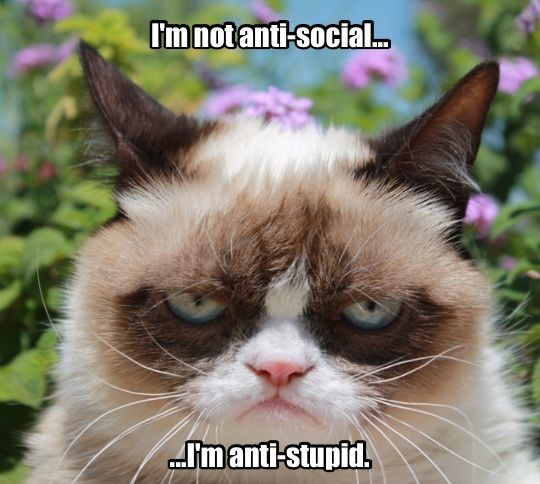 Another life lesson with Grumpy Cat.