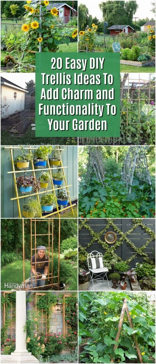 Creating a Trellis in your backyard