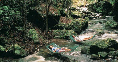 Room + Rainforest | AUSTRALIA — Room + Wild