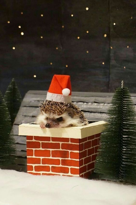 5 Totally Adorable Hedgehogs With Tiny Santa Hats - I Can Has Cheezburger?