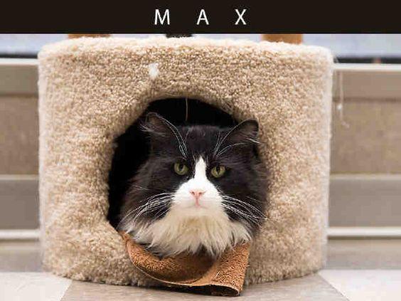 Max (A666087)