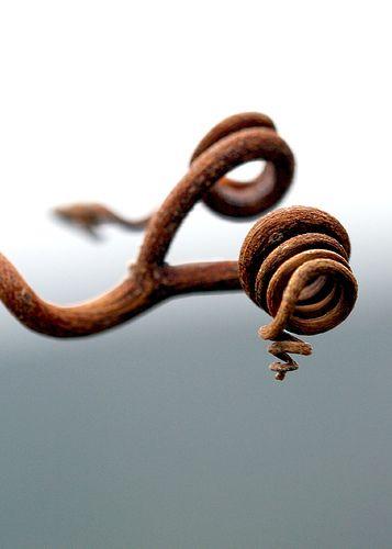 Vine Spirals