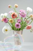 Ranunculus - not roses