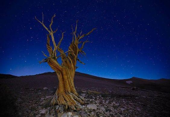 "Peter Lik Fine Art Photography  ""Starry Night""  White Mountains, California"