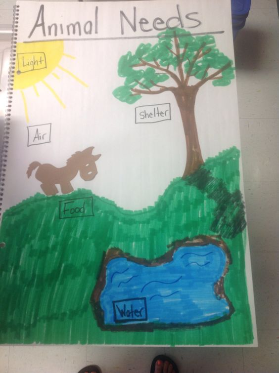 Basic Needs Of Animals Worksheets : Animal needs anchor chart pinterest