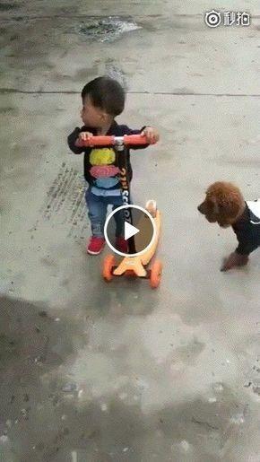 Cachorro toma patinho e sai correndo