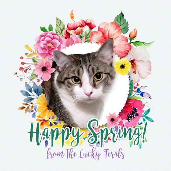Happy First Day Of Spring! Happy Vernal Equinox! - News banner cat happy spring meme spring vernal equinox