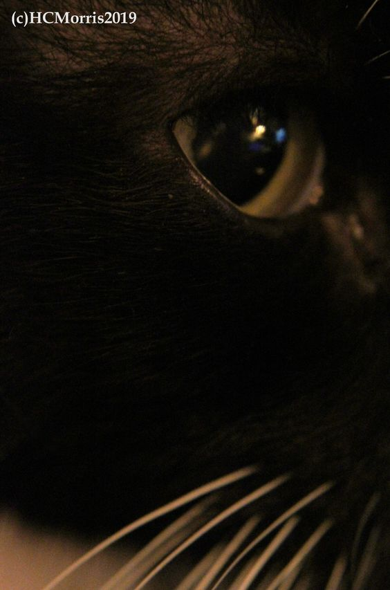 a close up image of reflections in my cats eye